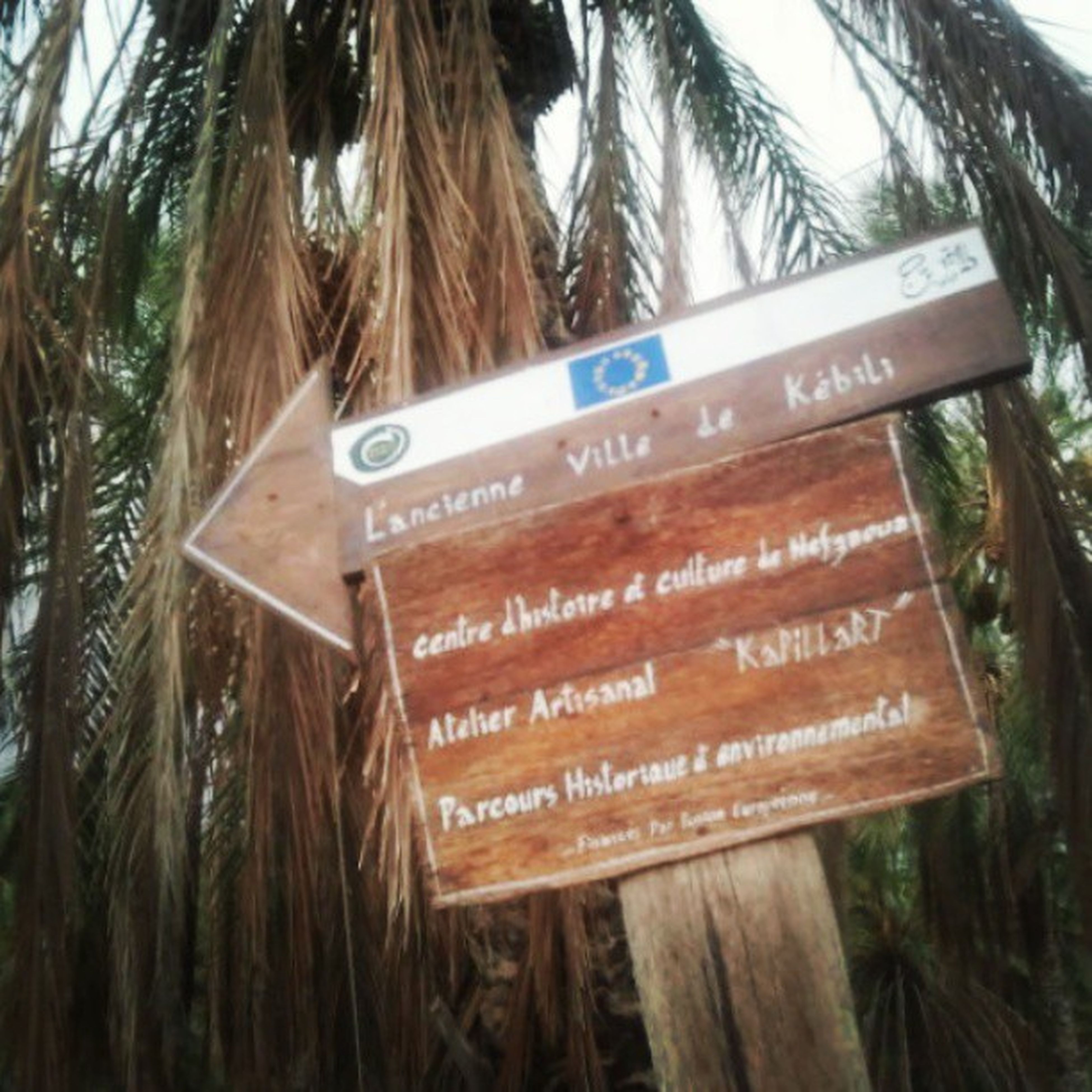 text, western script, communication, information sign, non-western script, information, tree, capital letter, sign, guidance, warning sign, close-up, message, day, growth, signboard, wood - material, outdoors, sign board, tree trunk