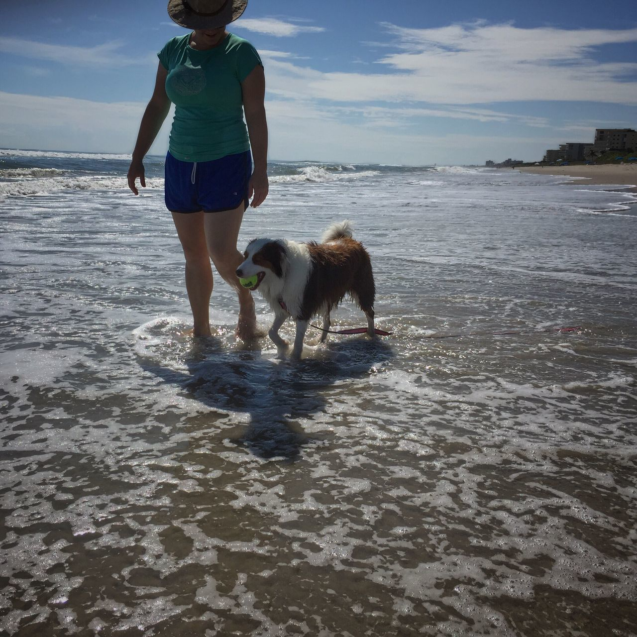 Relaxing stroll on the beach Australian Shepherd  Melbourne Beach, FL Pet Owner Beach Dog Playing With My Dog Summer Fun Leisure Activity Dogslife Dog Pets Beach Togetherness Strolling Strolling On A Hot Day