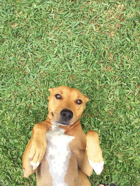 Do With Me What You Want Dog Dog In Park Dog Perspective Dog In Grass Waiting For You