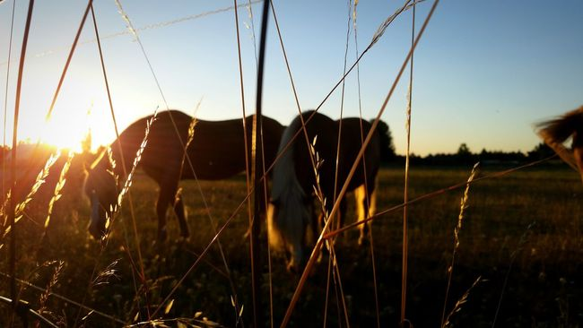 Lens Flare Sun Sunbeam Meadow Horse Horses Dawn Grass Hay Nature Life Beautiful Warm Feel Animal Animals In The Wild Animals Berlin Outside Weather Sky Blue Sky