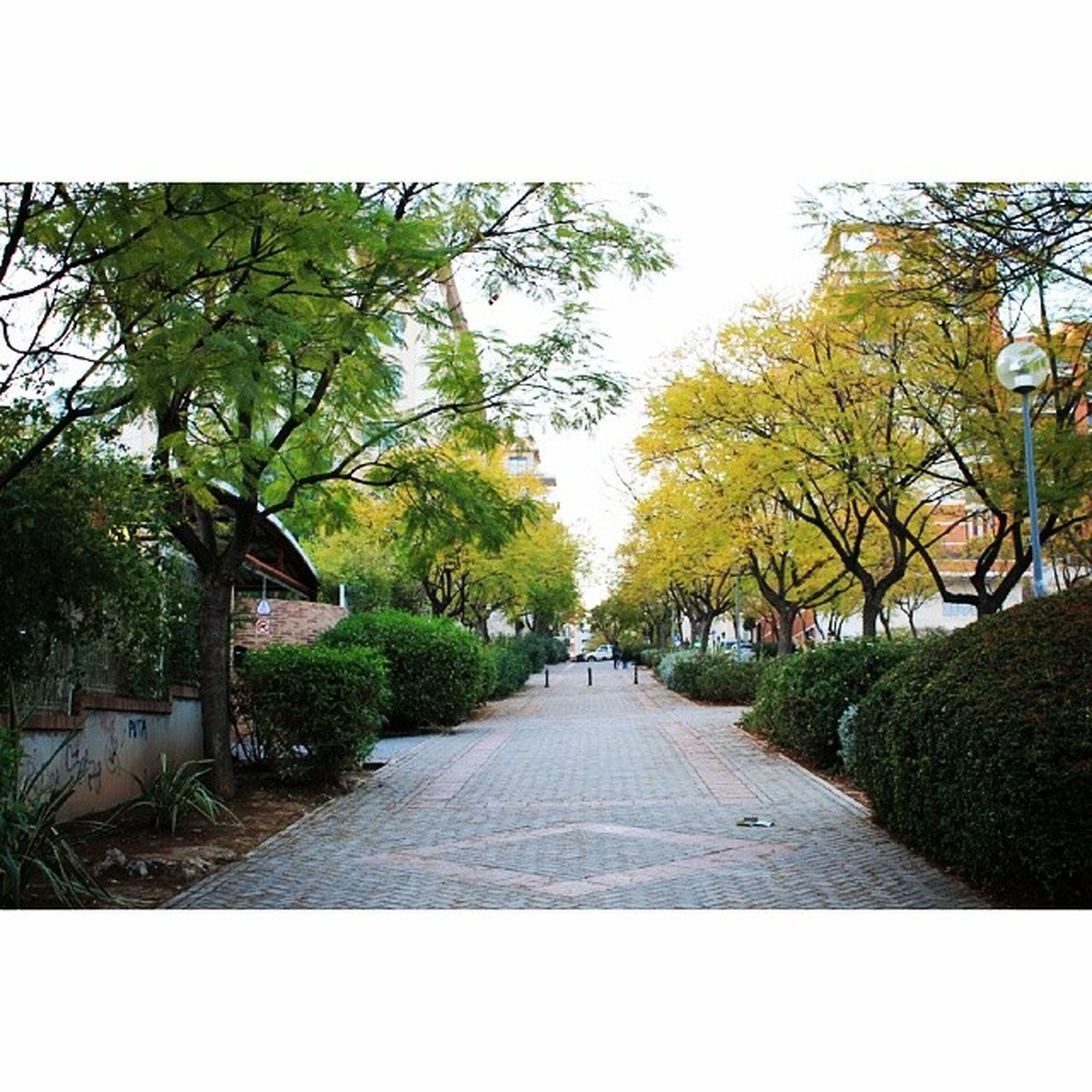 tree, the way forward, transfer print, clear sky, growth, diminishing perspective, footpath, sunlight, auto post production filter, road, green color, nature, branch, vanishing point, tranquility, day, treelined, park - man made space, sky, empty
