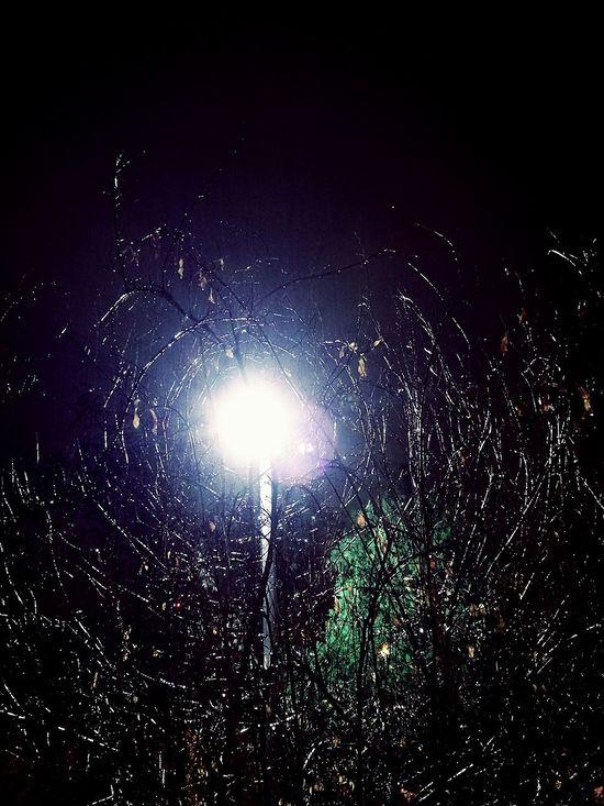 I saw a tree hugging the light Light Night Rain Nature_love