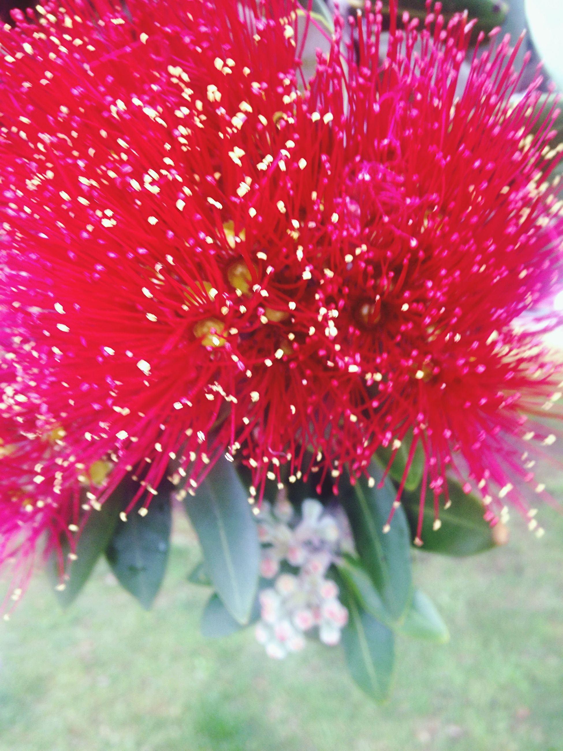 flower, freshness, red, petal, growth, fragility, flower head, beauty in nature, close-up, nature, pollen, pink color, blooming, stamen, plant, selective focus, in bloom, single flower, day, focus on foreground