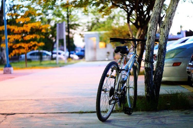 Bike Ride Bicecly Mexicali Baja California Enjoy Life