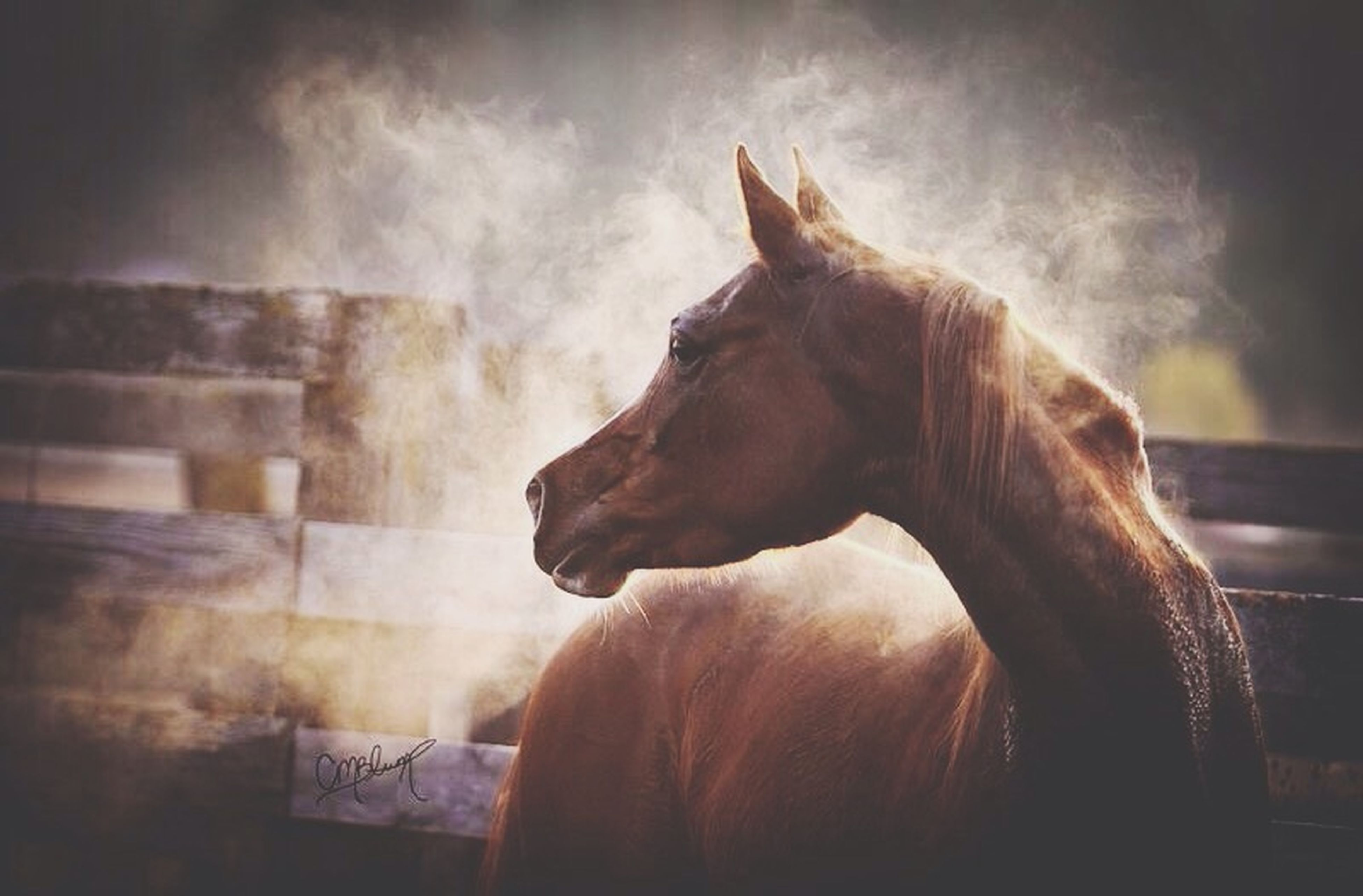 one animal, domestic animals, animal themes, mammal, pets, dog, indoors, no people, day, built structure, domestic cat, horse, close-up, low angle view, sky, wall - building feature, standing, sunlight, architecture