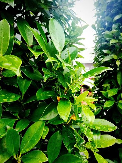 Green Color No People Day Close-up Outdoors Plant Nature Leaf Water Beauty In Nature Freshness Growth