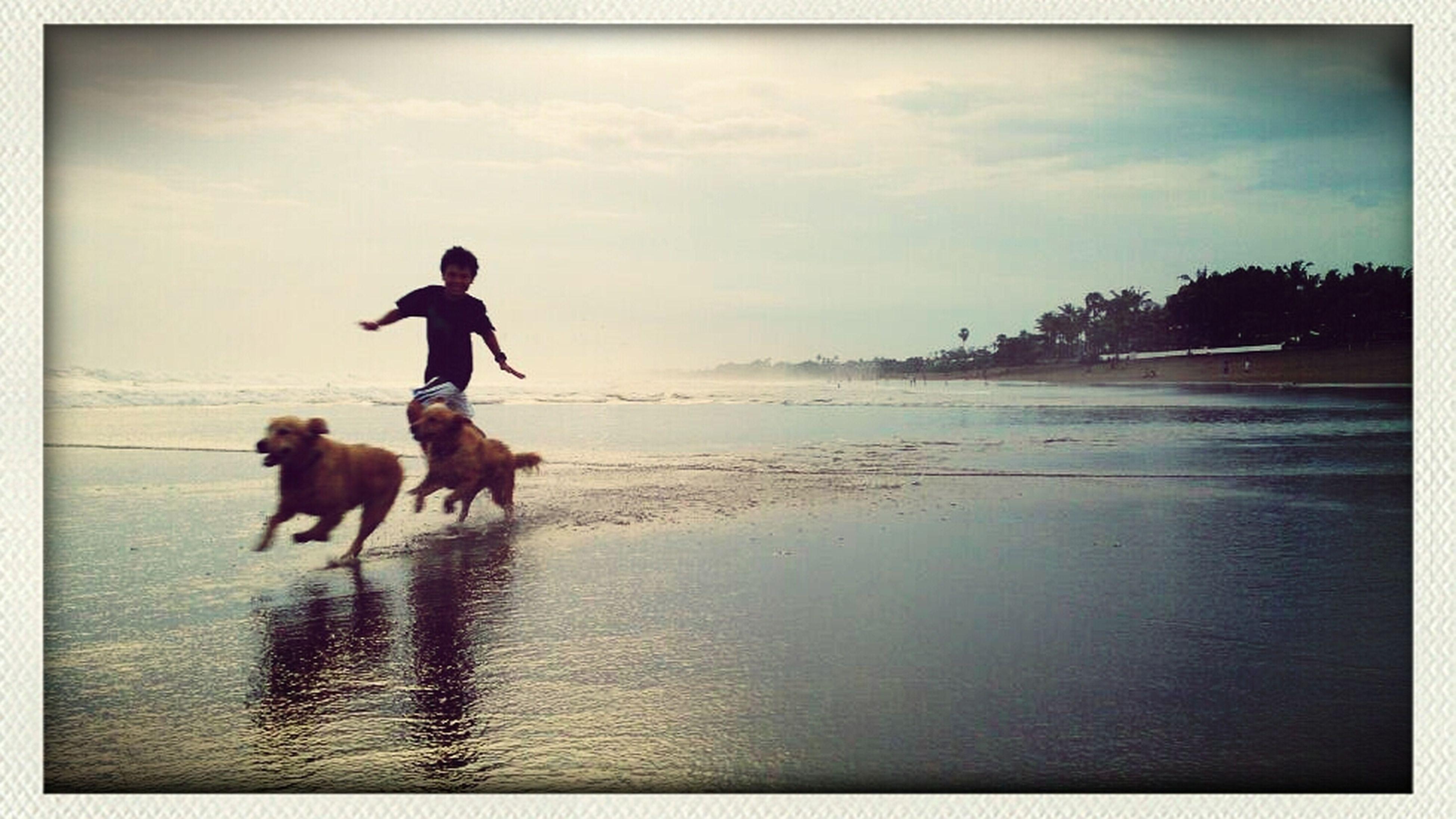 Doggie Diaries...