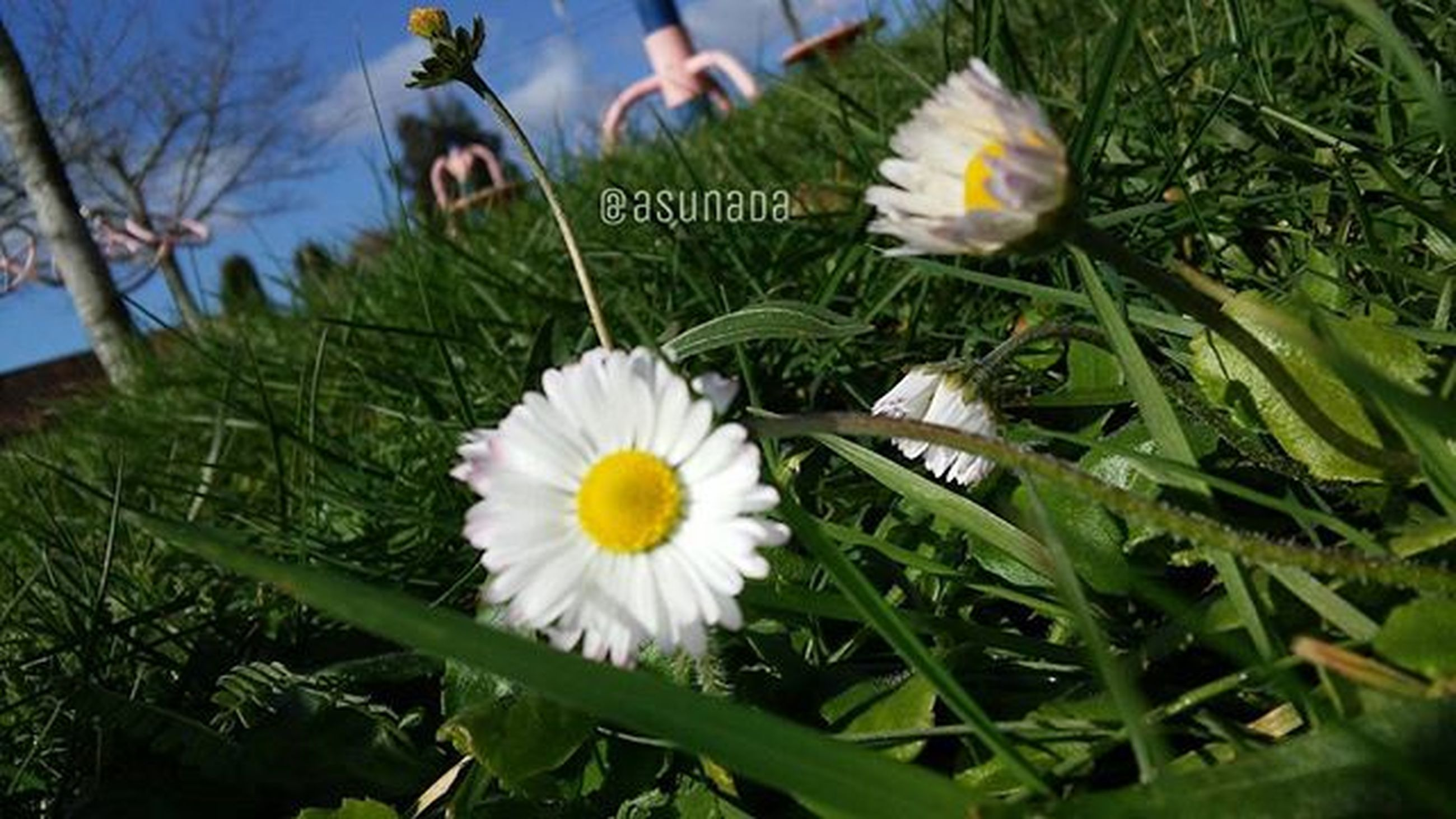 flower, growth, freshness, plant, grass, green color, white color, fragility, field, petal, flower head, high angle view, nature, beauty in nature, leaf, blooming, day, outdoors, park - man made space, grassy