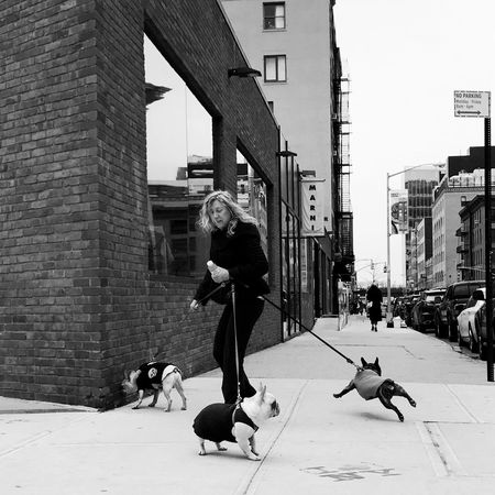 Nicole The Street Photographer - 2017 EyeEm Awards Dog Pets EyeEm Best Shots - Black + White EyeEm Best Shots Mobilephotography Street Photography Streetphotography NYC BYOPaper!