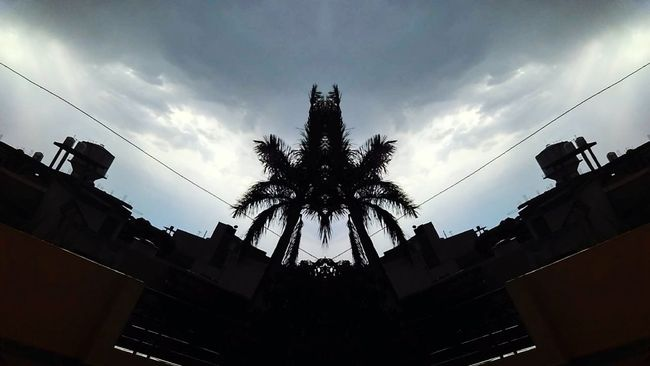 Mirror Picture Mirror Shot Mirrortree Palmtree On A Rainy Day Sky And Clouds Sky_collection Relaxing Moments