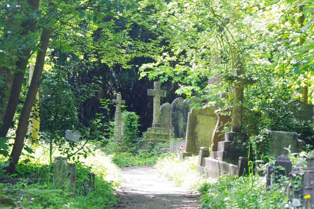 Walking Around The Cemetery Bristol Uk Nature On Your Doorstep Rundown Cemetery Yeah Springtime! Nature Relaxing Taking Photos