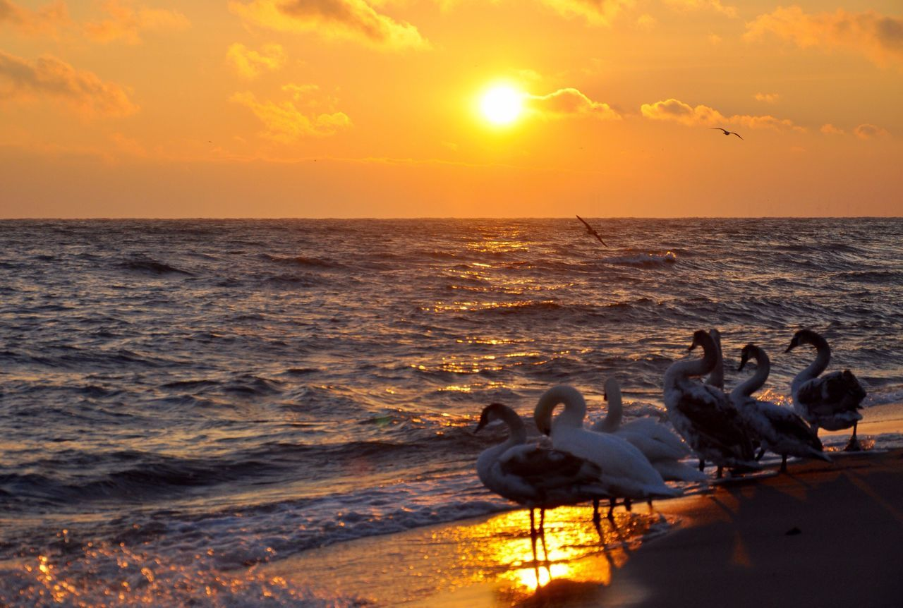 Silhouette Of Ducks At Shore During Sunset