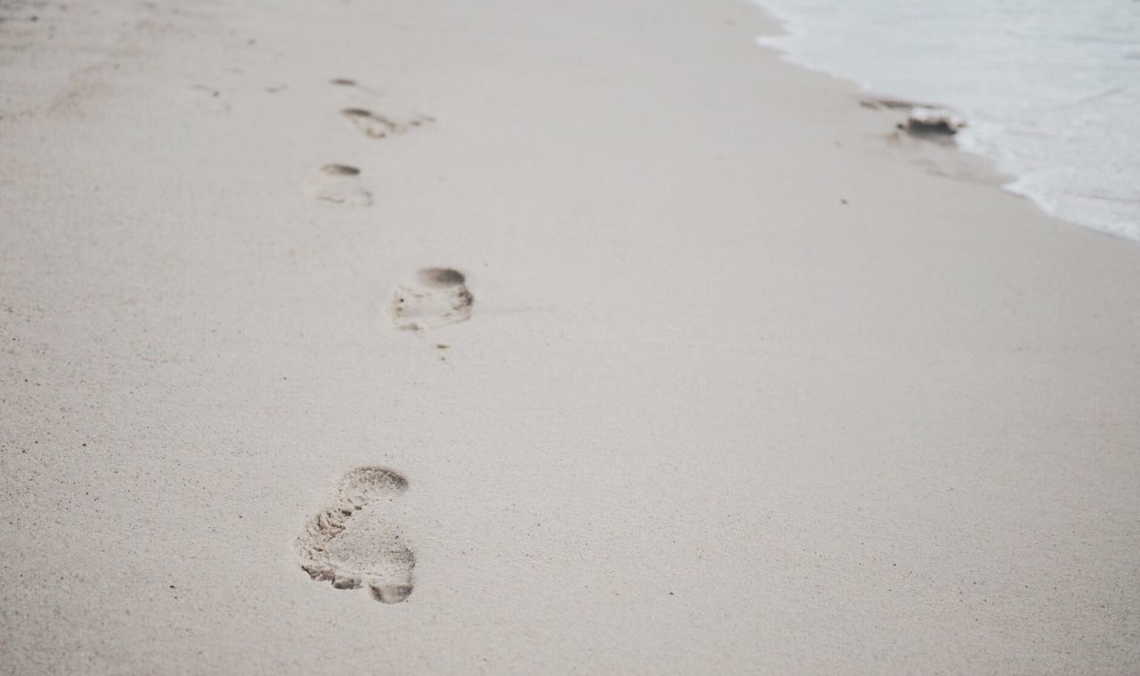 sand, beach, paw print, footprint, shore, nature, no people, day, outdoors, close-up