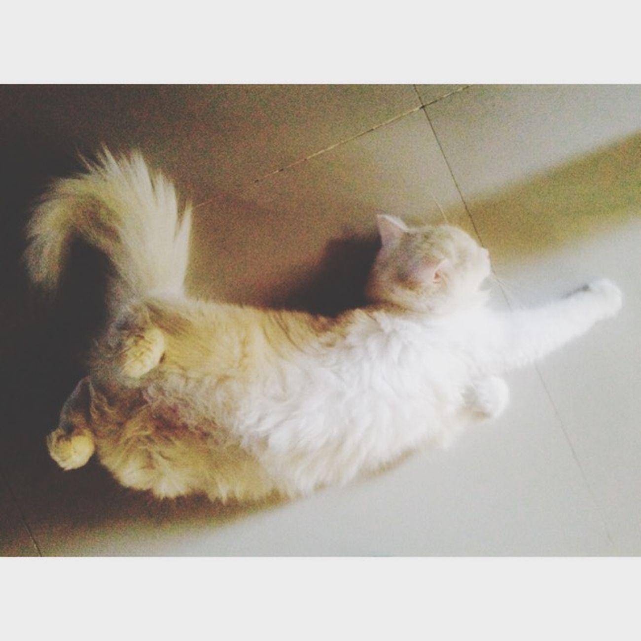Lab lab shishuu ❤️😚 Persiancat ILoveThis Relaxing Boooring Vscocam