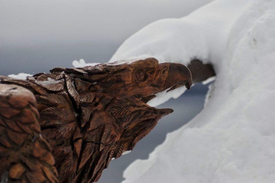 Eagle Woodcraft Snow Argentina Cerro Tronador Statue Wood Vacations South America