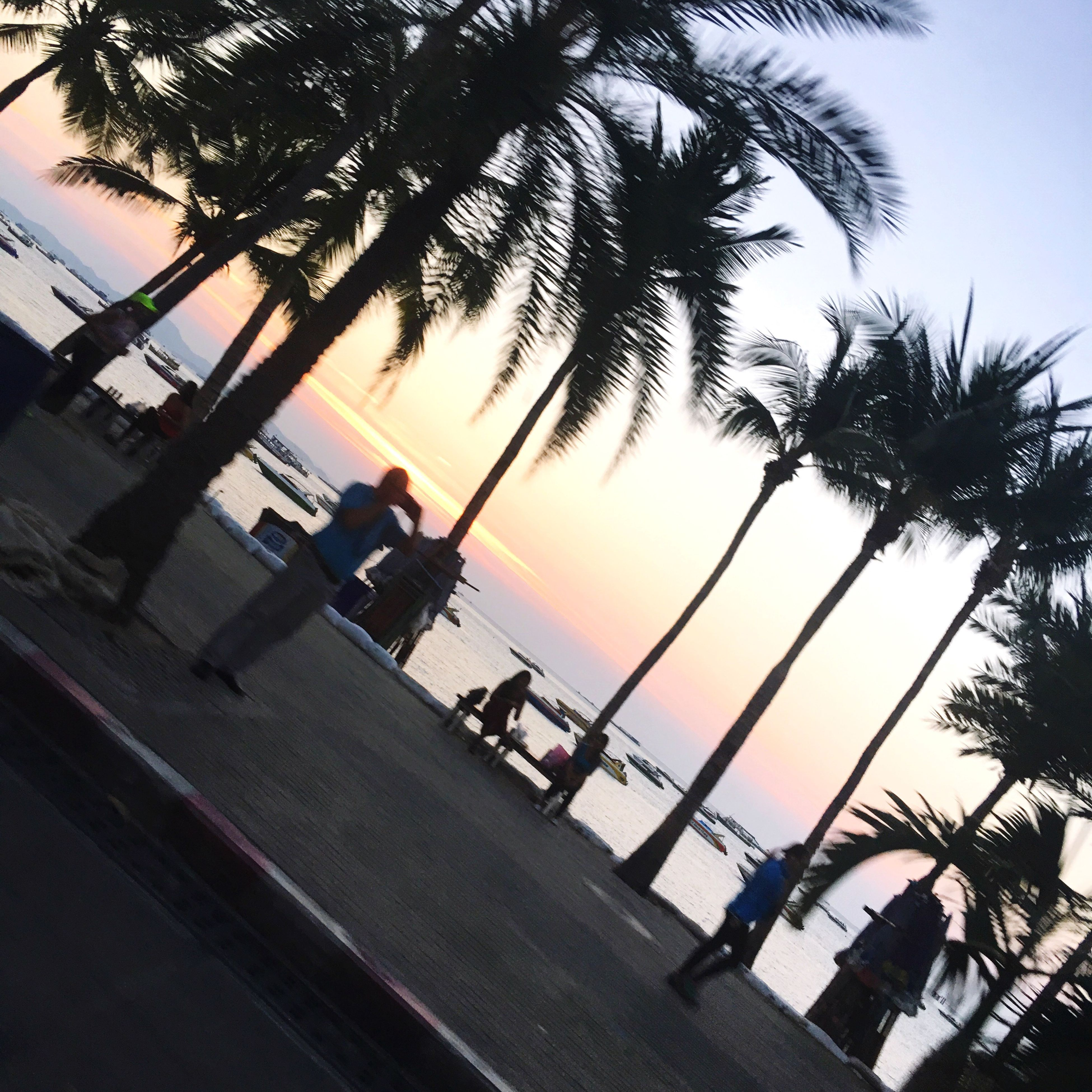 sunset, sky, tree, palm tree, sea, building exterior, built structure, outdoors, no people, city, architecture, beach, water, nature, day
