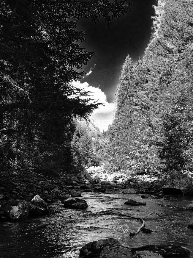 Mountain Nature Blackandwhite Scenics Tranquil Scene Beauty In Nature Non-urban Scene Rock Water WoodLand