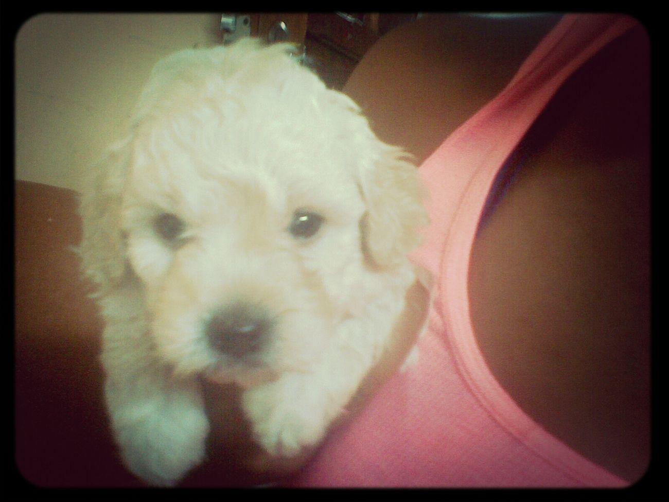 Mi Nieto Hijo De Mi Puppy..:-)