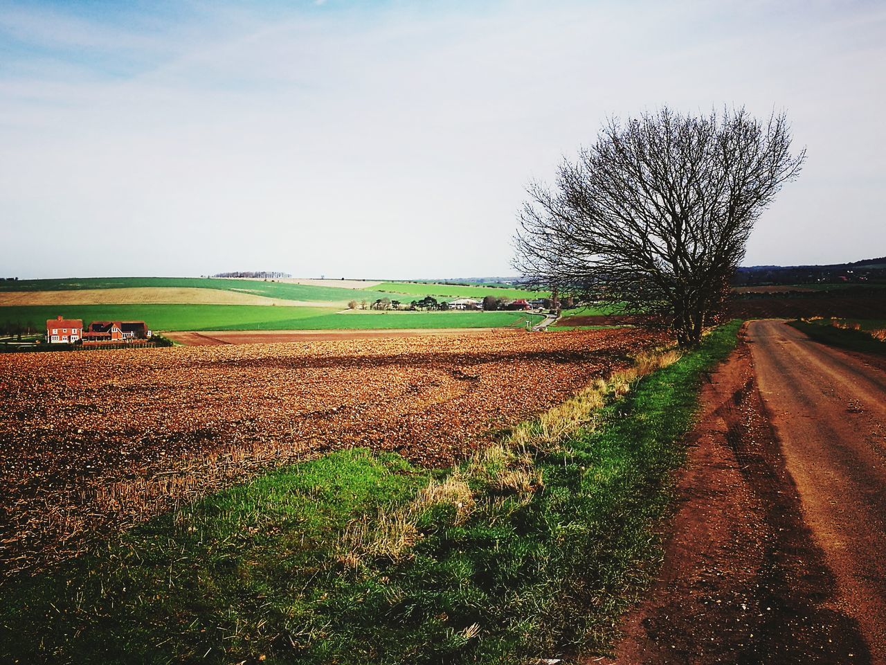 agriculture, field, rural scene, landscape, tranquil scene, nature, beauty in nature, tranquility, plough, scenics, sky, day, growth, no people, tree, bare tree, outdoors, plowed field