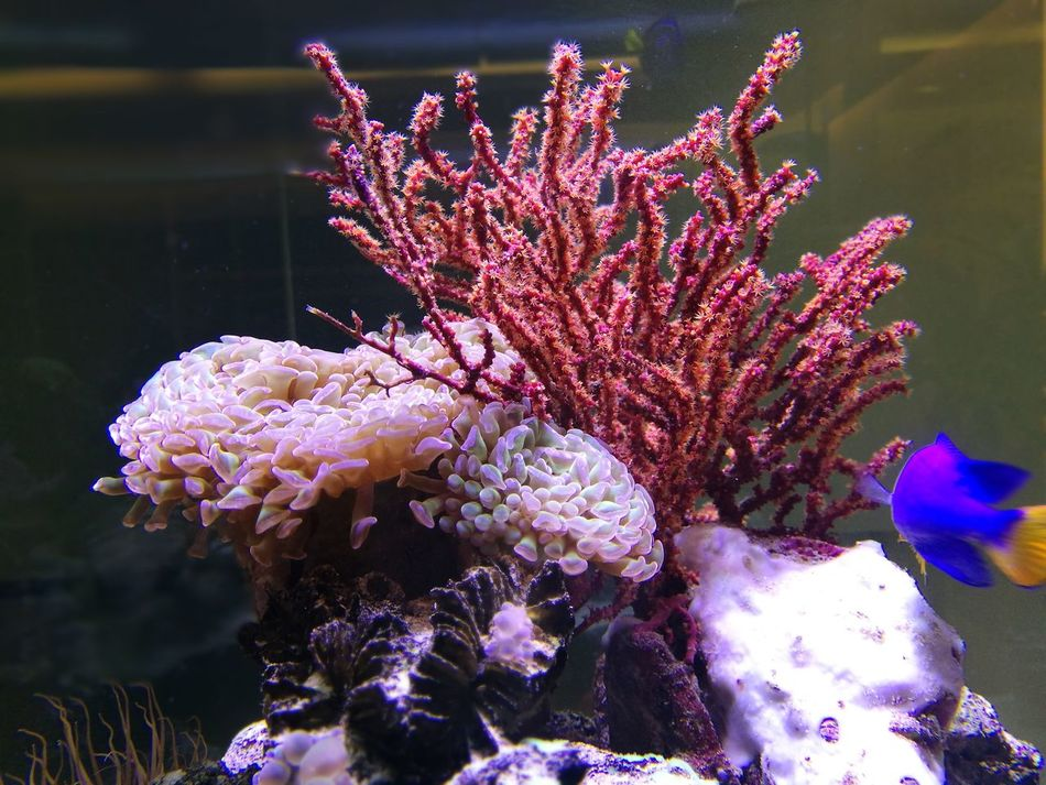 fish tank Fish Tank Fish Tank Decoration Fish Tank Reflections Coral Sea Anemone In The Water Bangkok Thailand