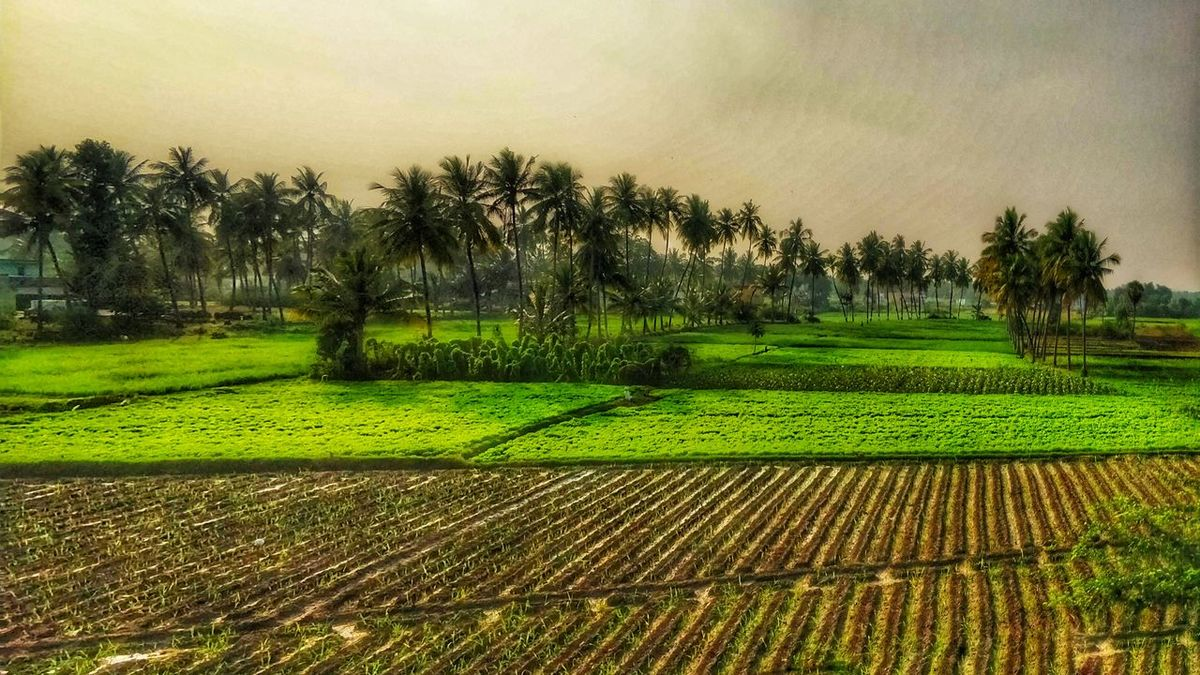 nature of farming Tree Green Color Agriculture Growth Beauty In Nature Field Nature Outdoors Rural Scene Scenics Grass