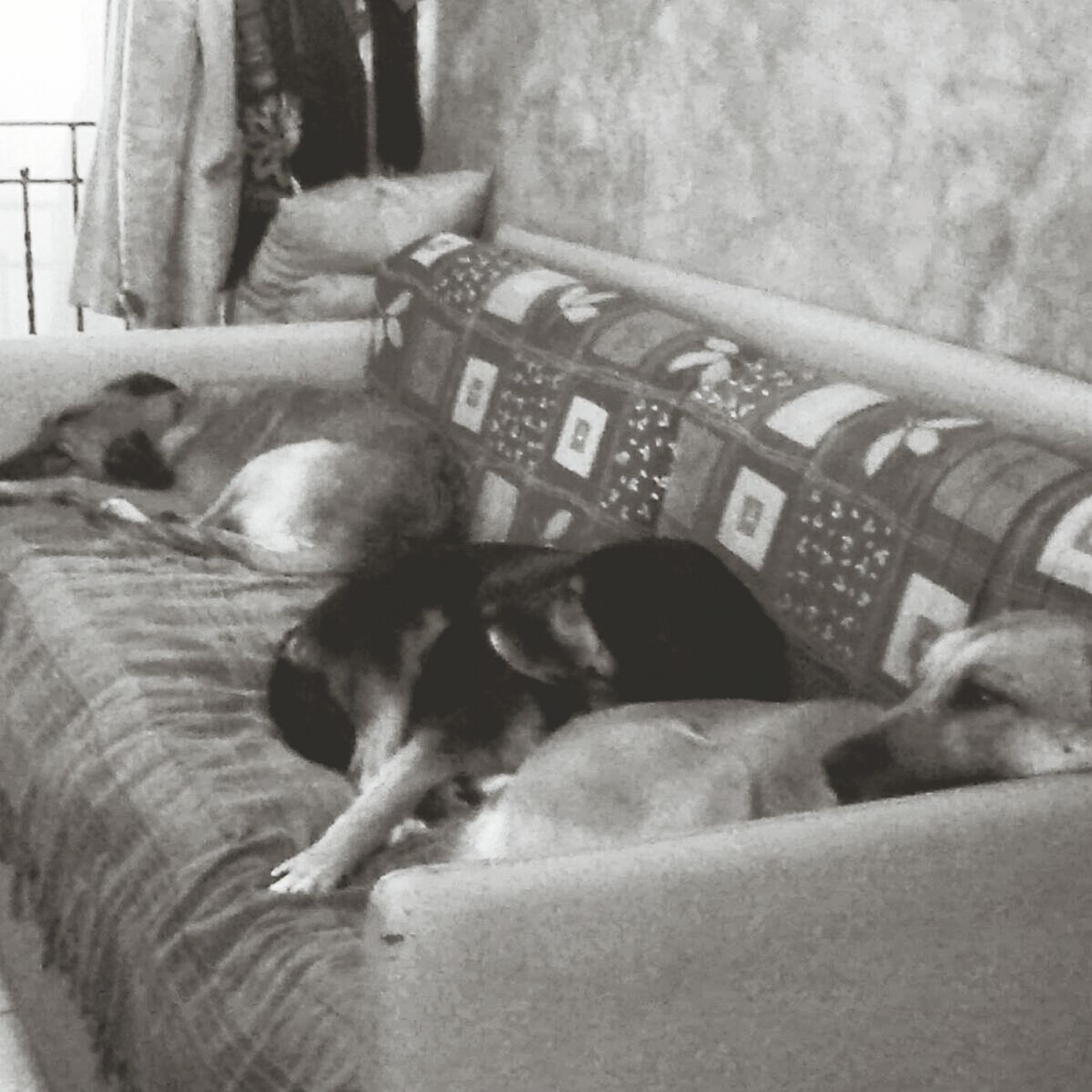 My Love Relaxing I Love This Dog FAMILY <3