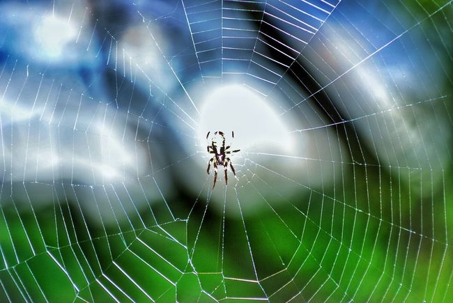 Abstract Backgrounds Beauty In Nature Close-up Complexity Focus On Foreground Fragility Full Frame Natural Pattern Nature No People Outdoors Selective Focus Spider Spider Web Spinning Web