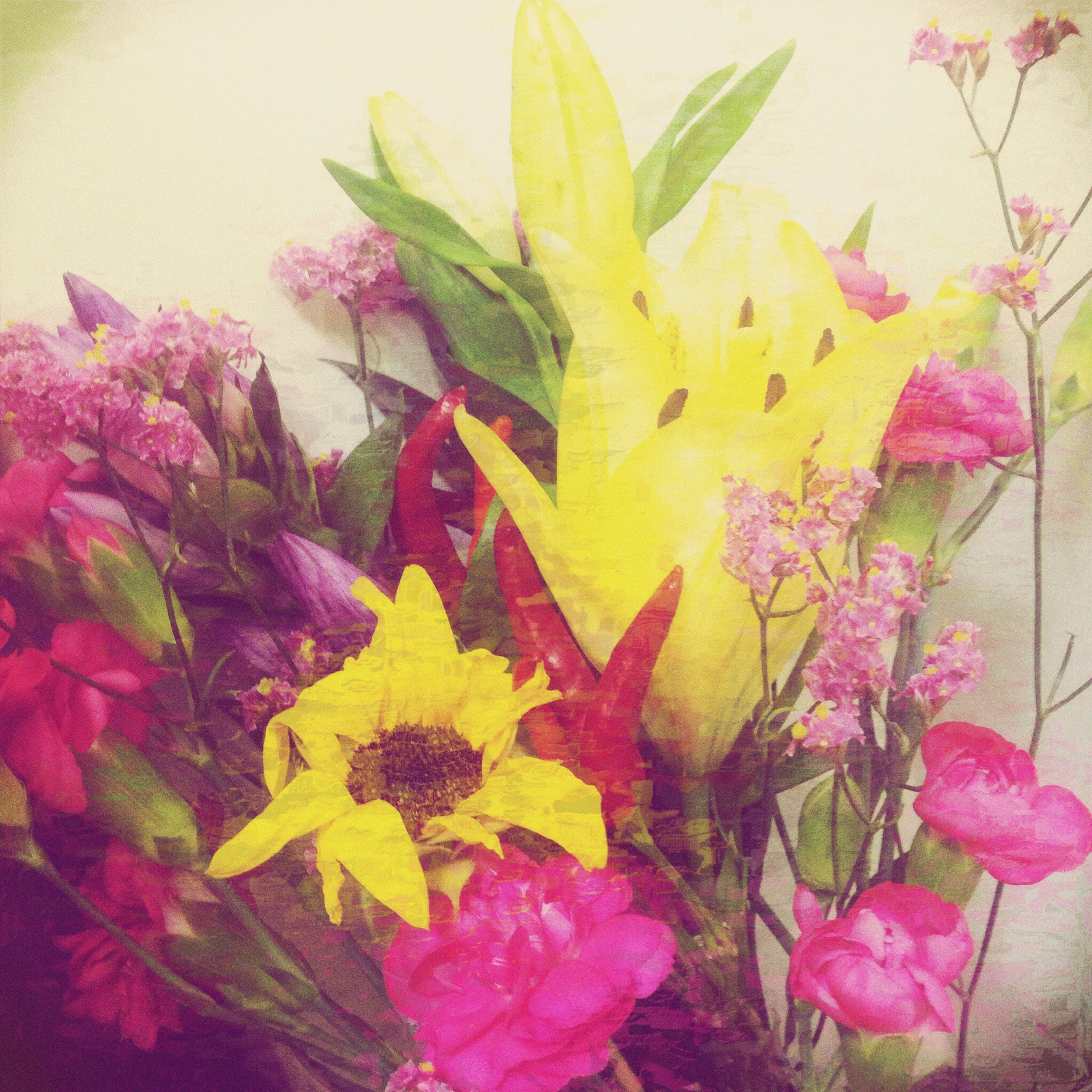 flower, fragility, petal, leaf, freshness, pink color, beauty in nature, growth, flower head, plant, nature, yellow, close-up, multi colored, wall - building feature, blooming, no people, indoors, high angle view, day