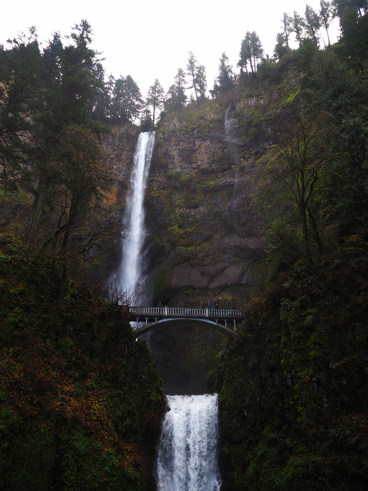 Forest Multnomah Falls  Nature Outdoors Sky Tree Water Waterfall