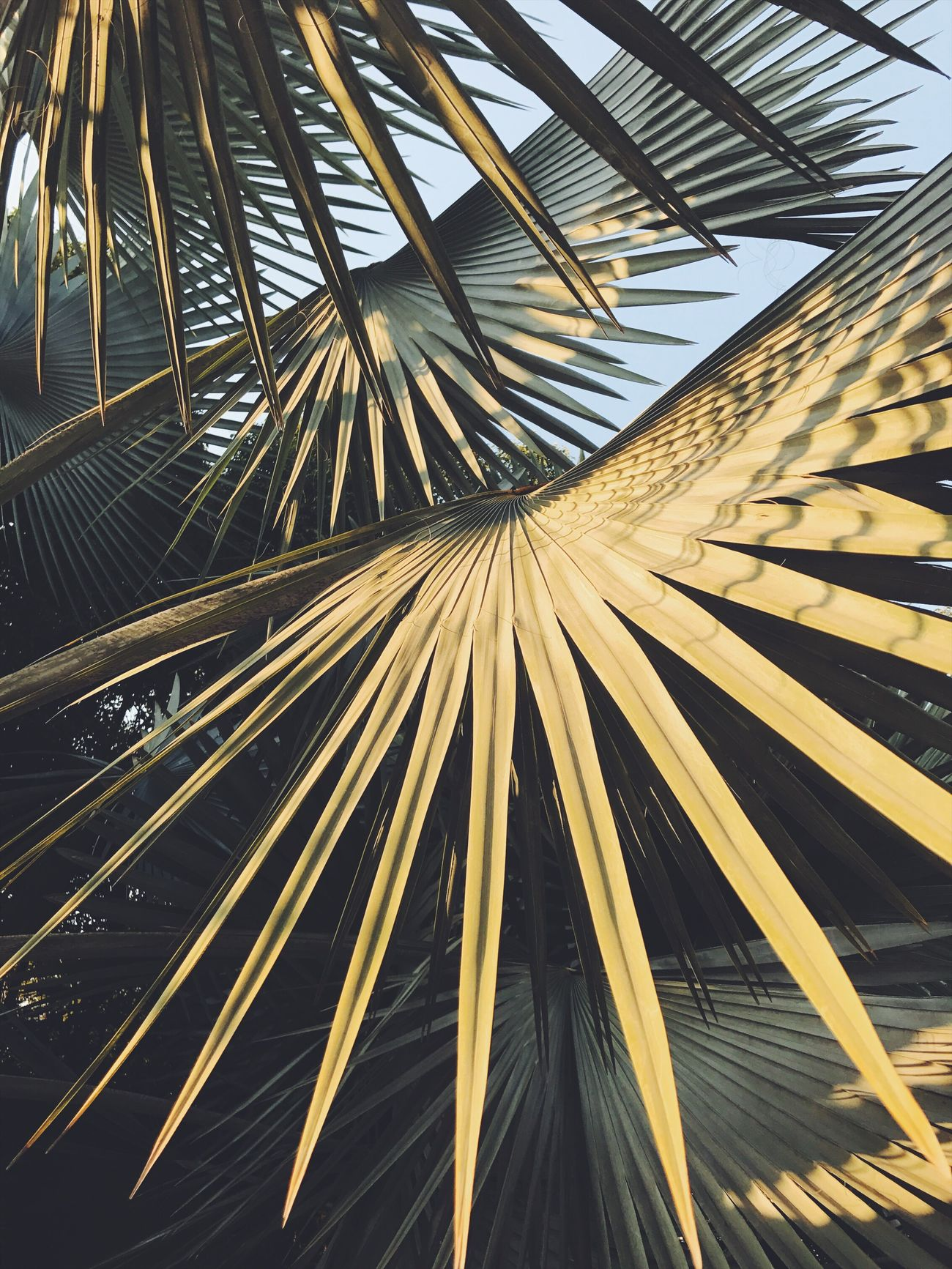 Palm tree No People Palm Tree Close-up Outdoors Nature Tree Palm Palms Palm Trees Leaves Leaf Backgrounds Photography Nature Full Frame Palm Tree