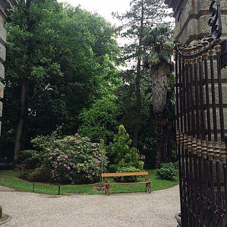 A kind of strange internal peace Green Garden Botanical Gardens Lovely Nature Trees Peace Peaceful