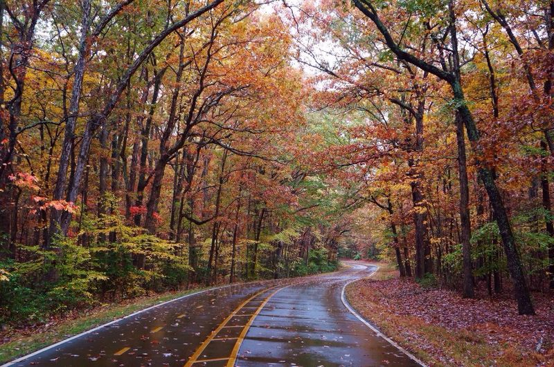 Forest Autumn Nature Colorful Beauty Prince William Forest Park Rainy Day