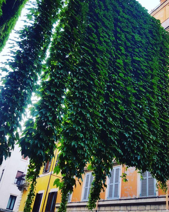 Rome Italy🇮🇹 Cavour