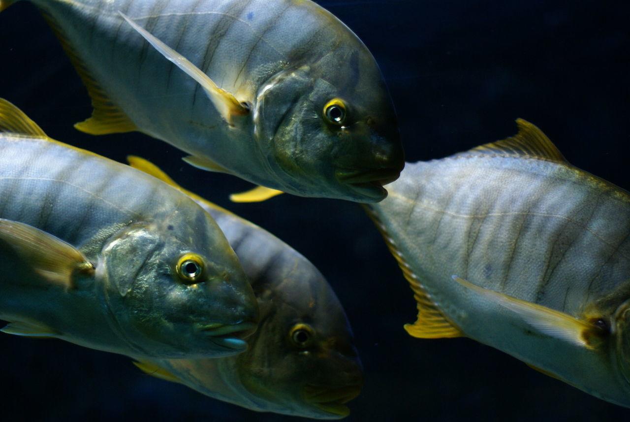 Beautiful stock photos of fish, , Animal, Aquarium, Aquatic