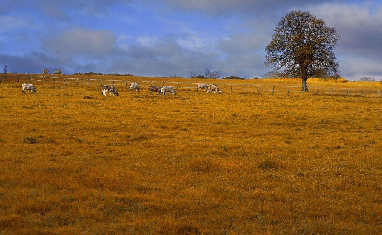 Wide Open Space Landscape Ireland Dublin Rural Scenes