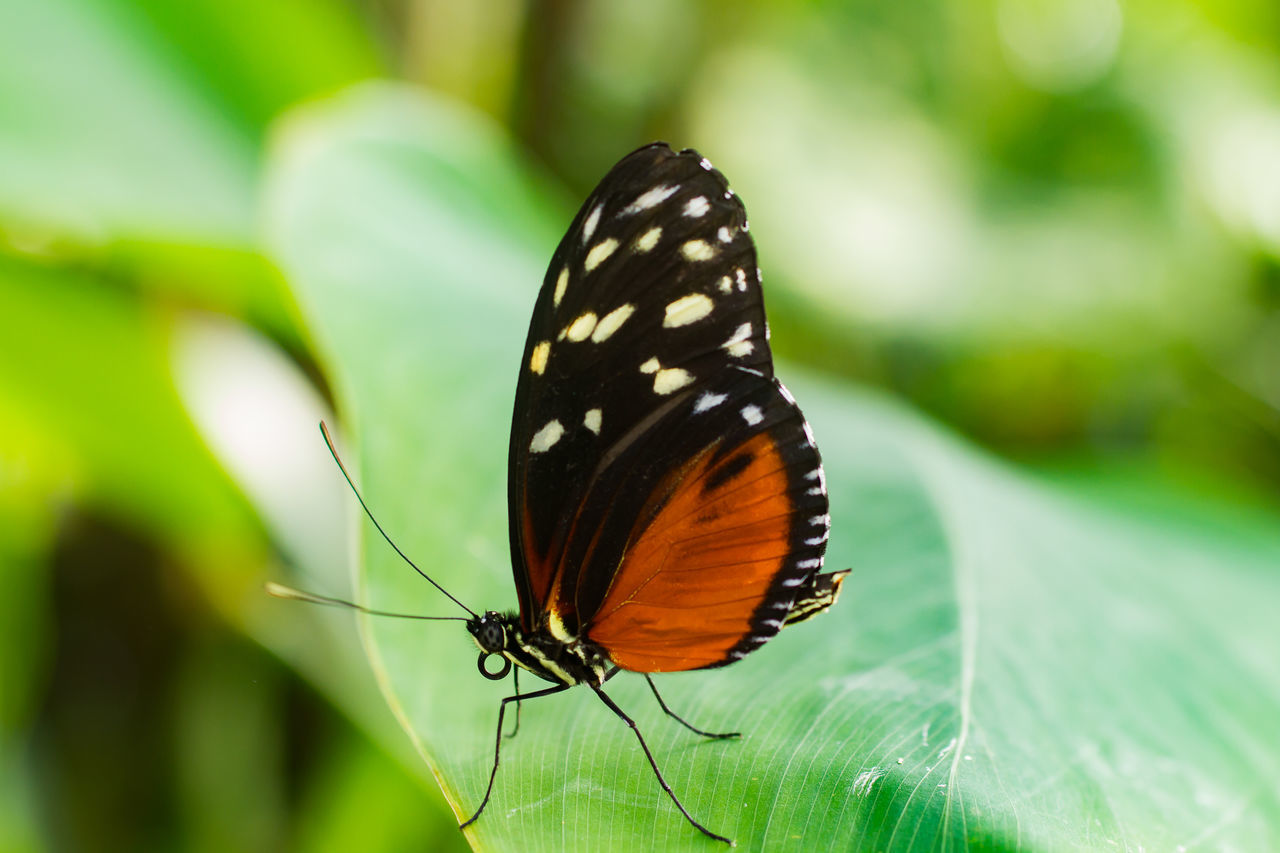 Butterfly Animal Markings Beauty In Nature Butterfly - Insect Close-up Day Focus On Foreground Growth Natural Pattern Nature No People Outdoors