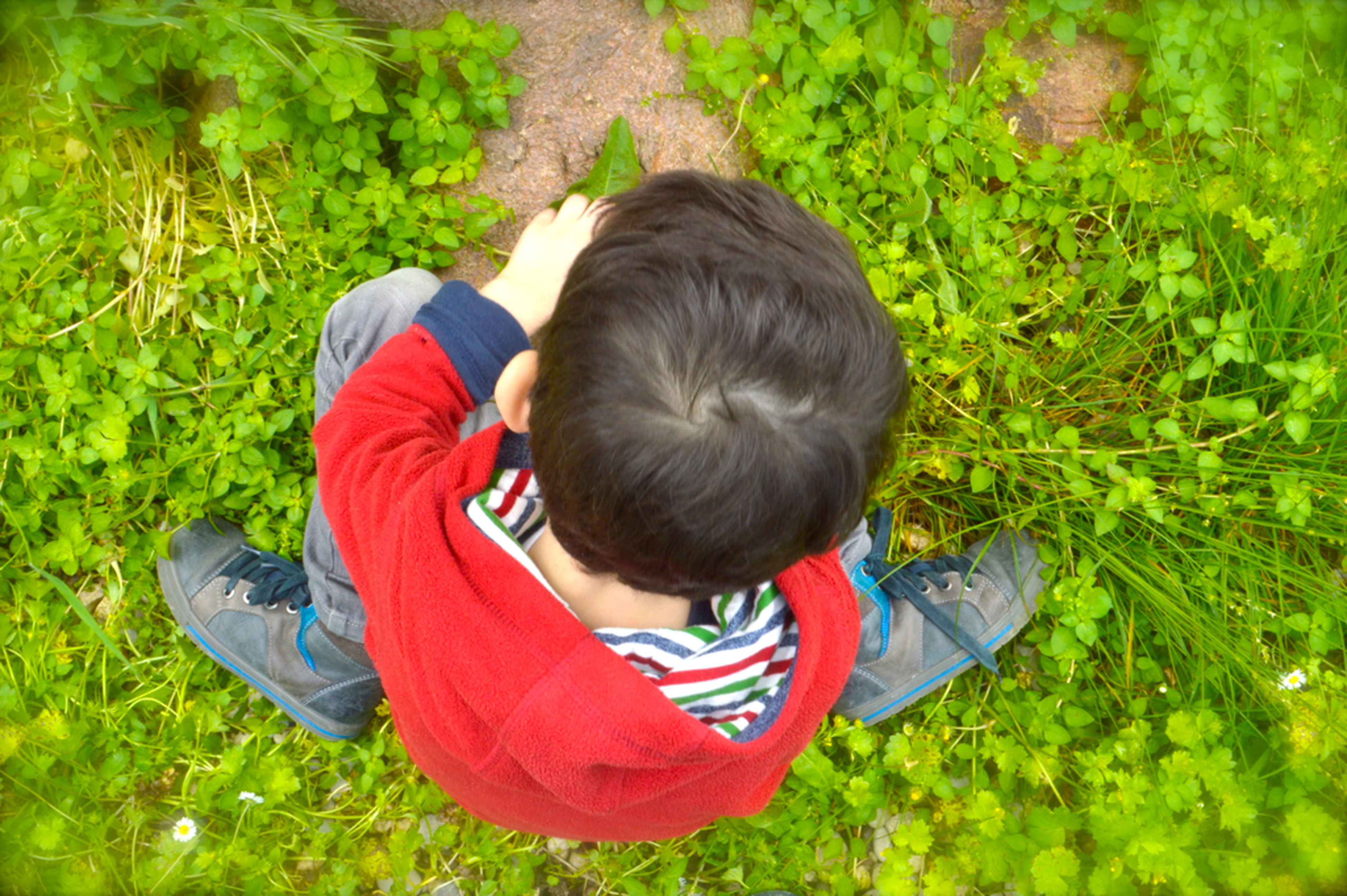 green color, rear view, childhood, headshot, black hair, holding, casual clothing, plant, innocence, curiosity, day, red, getting away from it all