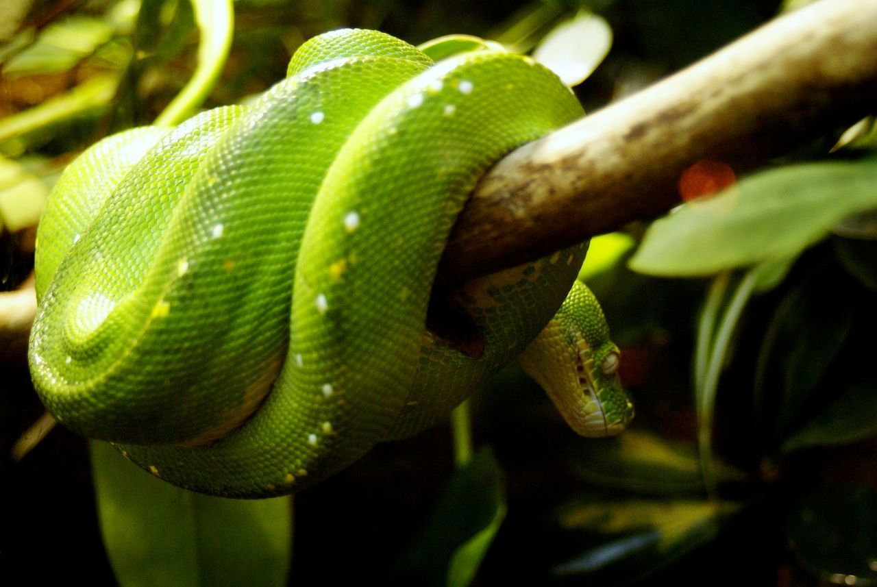 one animal, animal themes, animals in the wild, reptile, green color, animal wildlife, nature, close-up, day, outdoors, no people, plant, beauty in nature