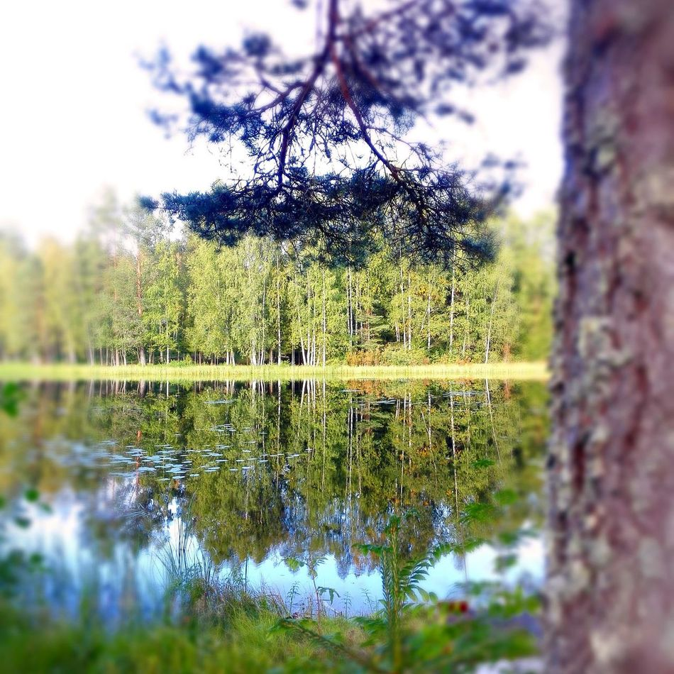Reflection Tree Nature Sky Growth No People Water Day Outdoors Beauty In Nature Grass Finland Summer Finlandia Finland Silent Moment Silence Sweet Moments Beauty In Nature Tree Green Color Nature Streetphotography