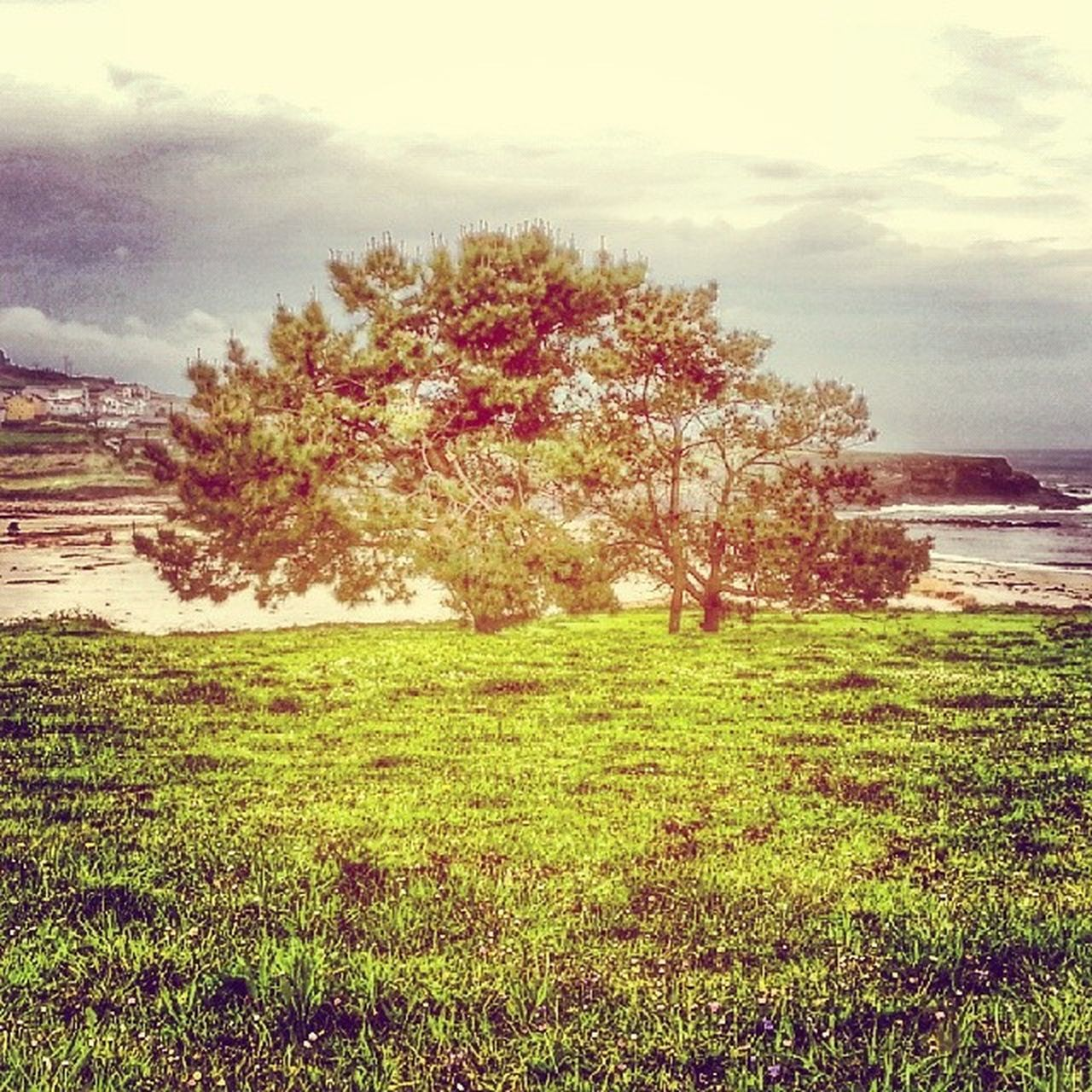 tree, nature, beauty in nature, grass, growth, sky, no people, outdoors, tranquility, cloud - sky, scenics, tranquil scene, day, field, flower, landscape, water