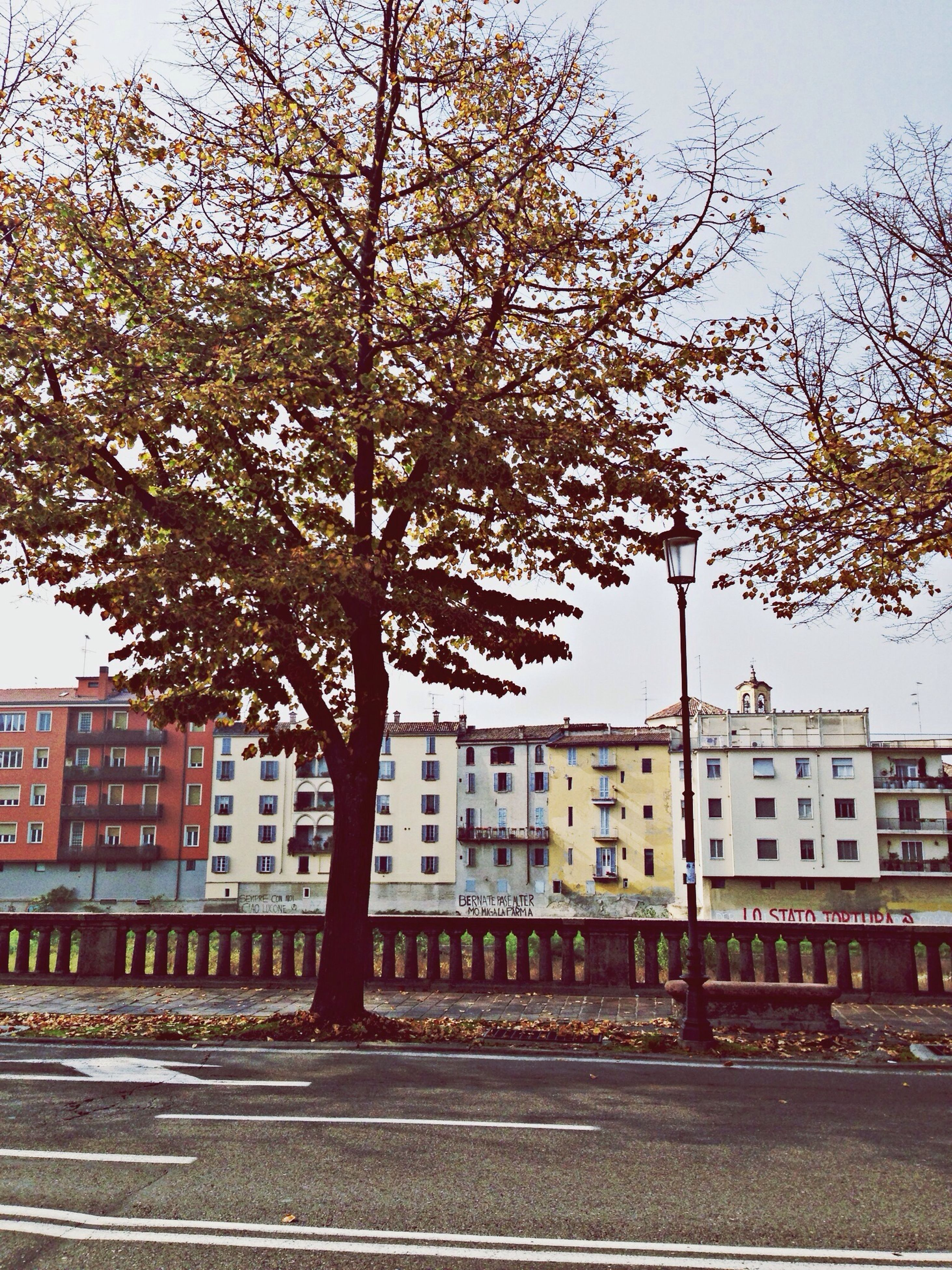building exterior, architecture, built structure, tree, city, transportation, bare tree, street, road, clear sky, car, branch, residential building, sky, residential structure, building, day, city life, outdoors, mode of transport