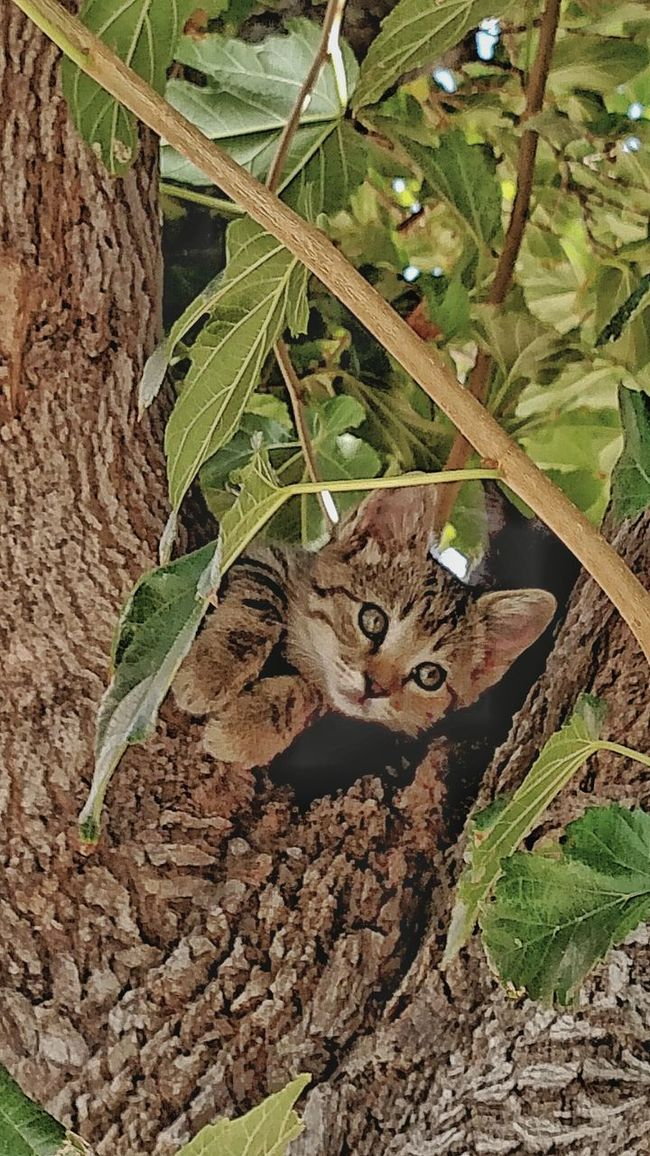 Animals Kittenlife Treetastic Lovecats Miss Copperkitten Colour Of Life Cats And Dogs Country Life Outdoors Beauty In Nature Pure Love Eyeemphoto