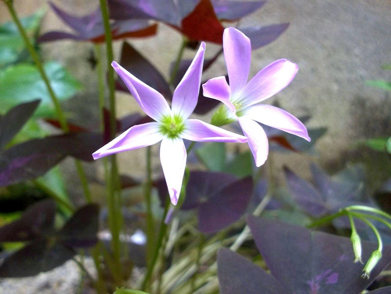 Flow likes flowers