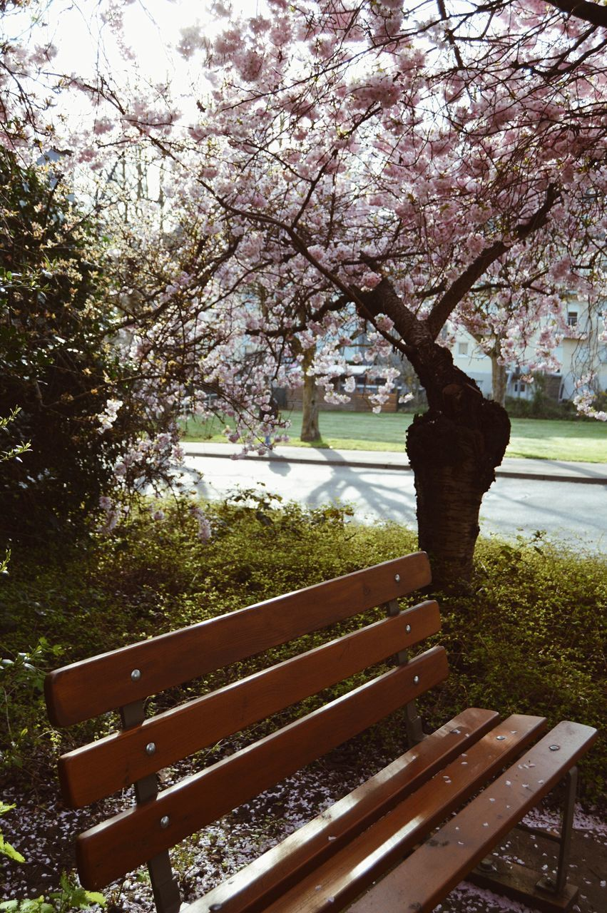tree, beauty in nature, blossom, nature, flower, no people, growth, springtime, branch, day, outdoors, scenics, freshness, fragility, sky
