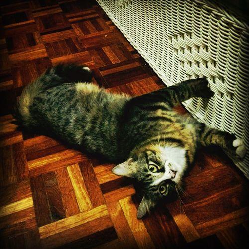 Meow??