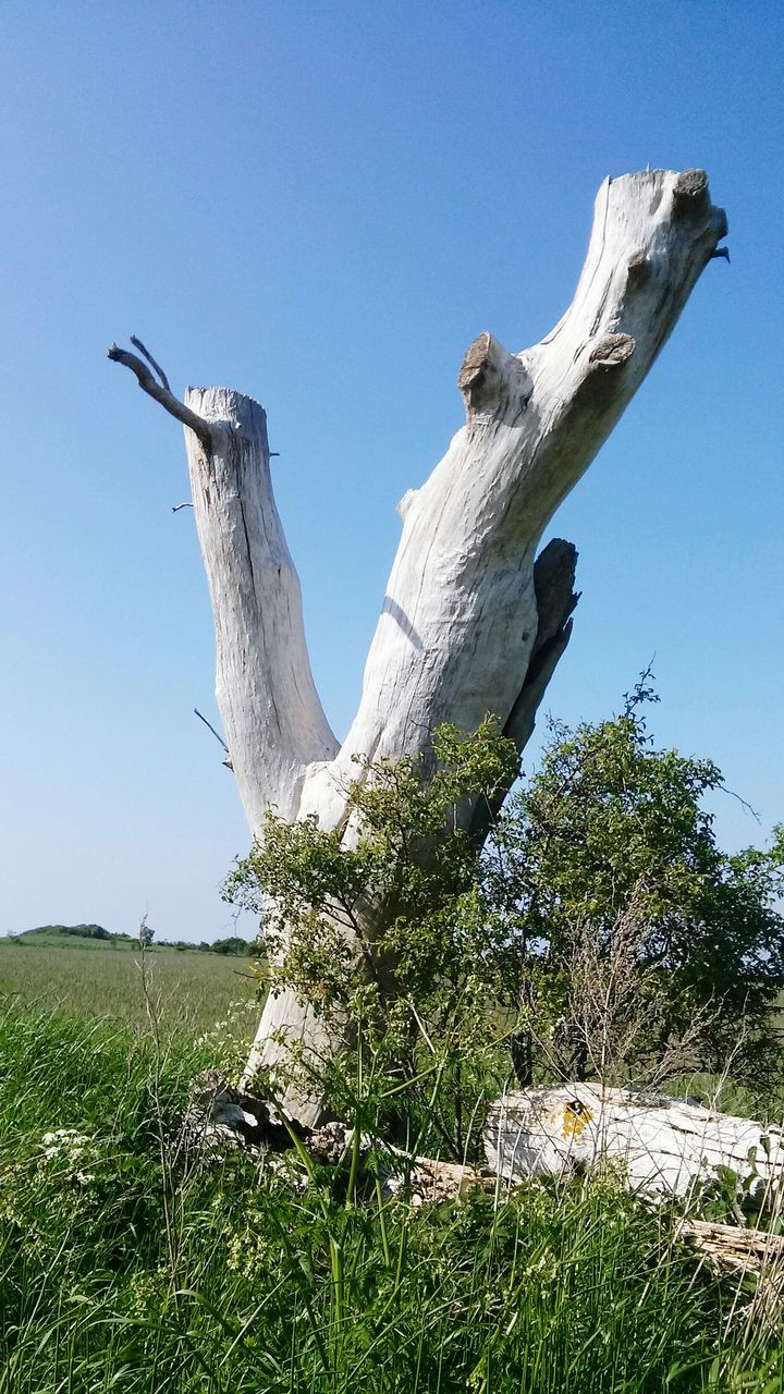 View Of Tree Stump On Grassy Landscape Against Sky