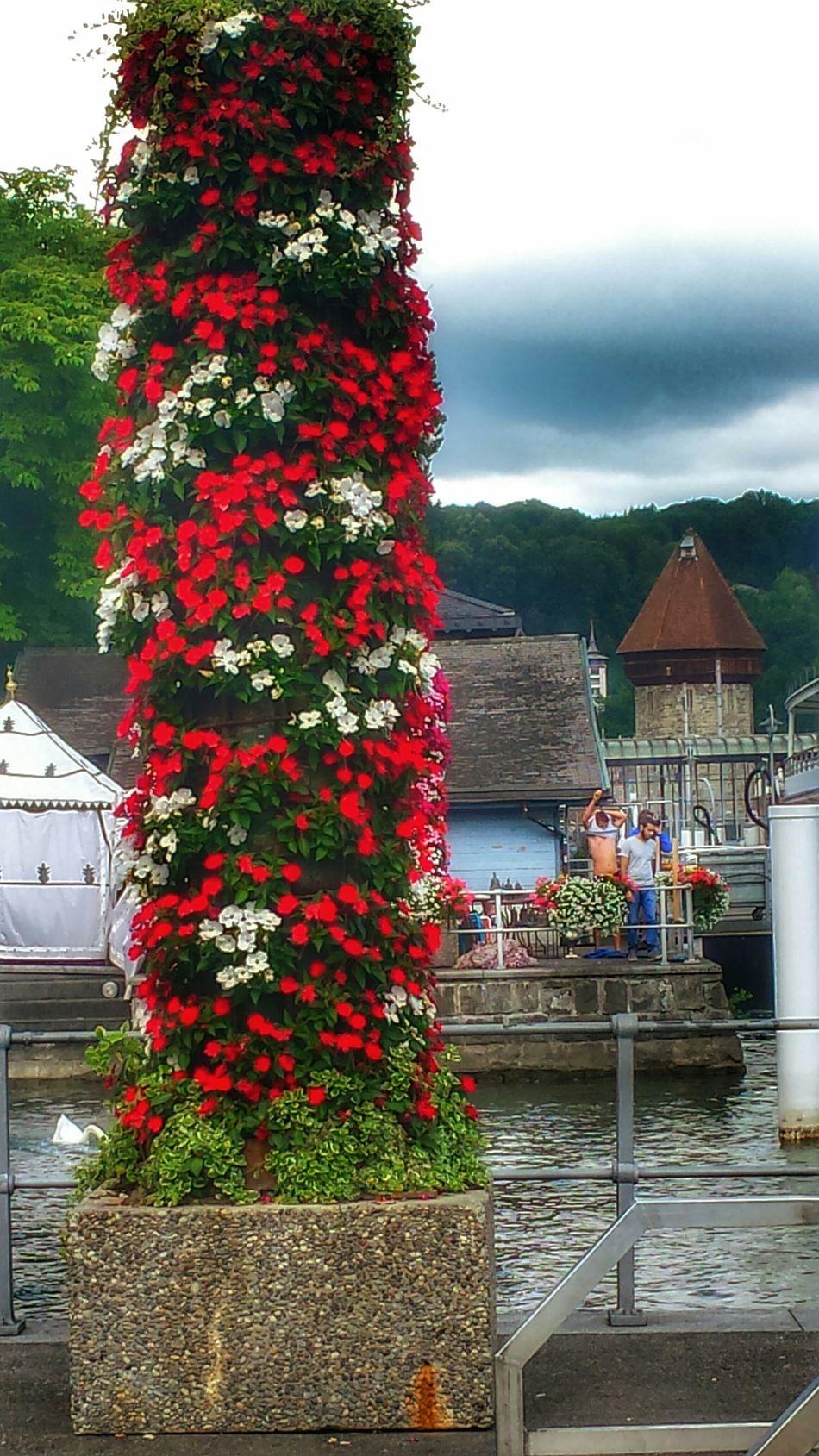 Luzern beim KKL... Taking Photos Swiss Luzern Lake Luzerne Nature On Your Doorstep