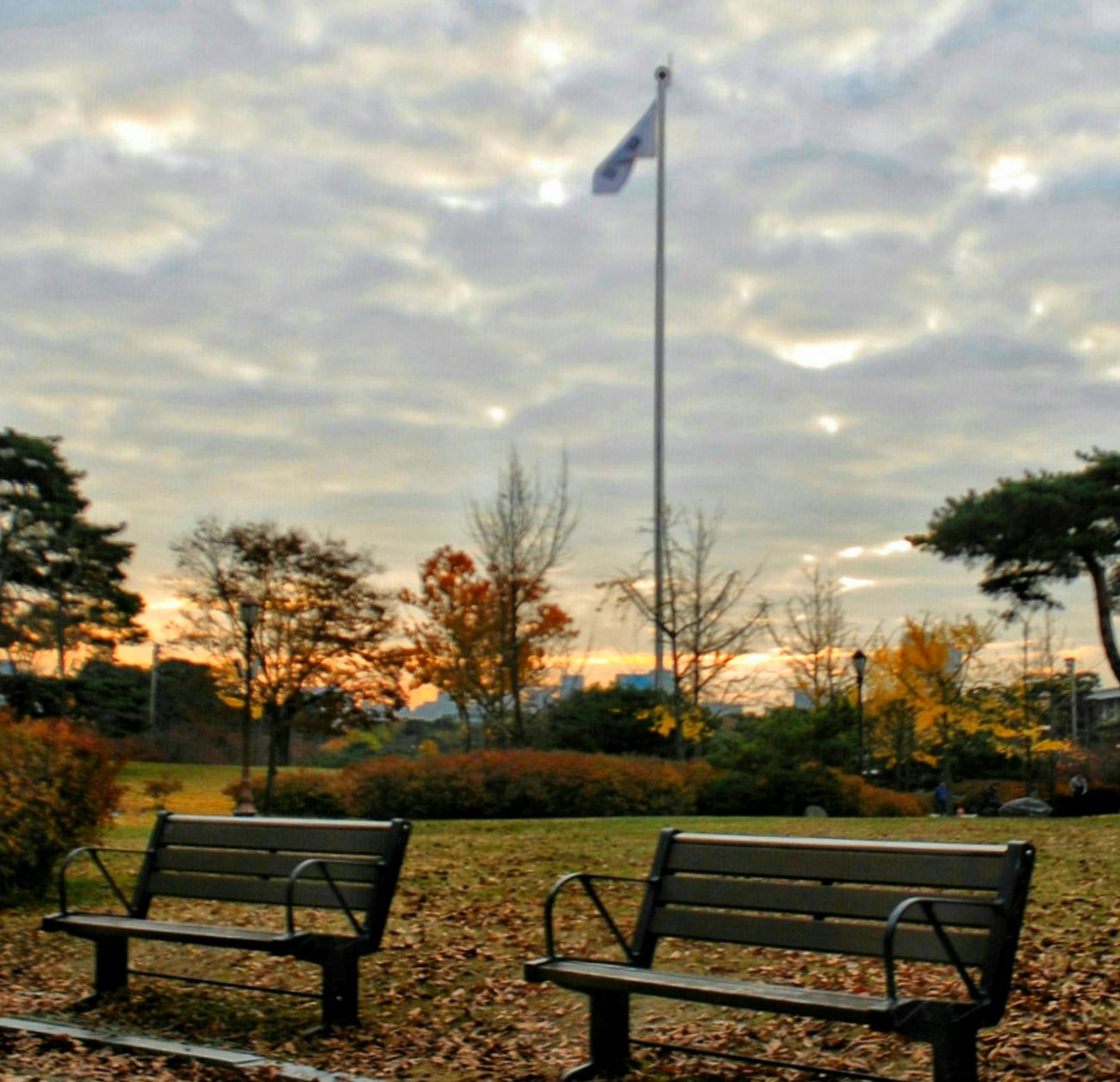 Leaving the memories of autumn once again... Autumn Sunset Memories Chairs Korea Waiting For Winter Leaving Memories