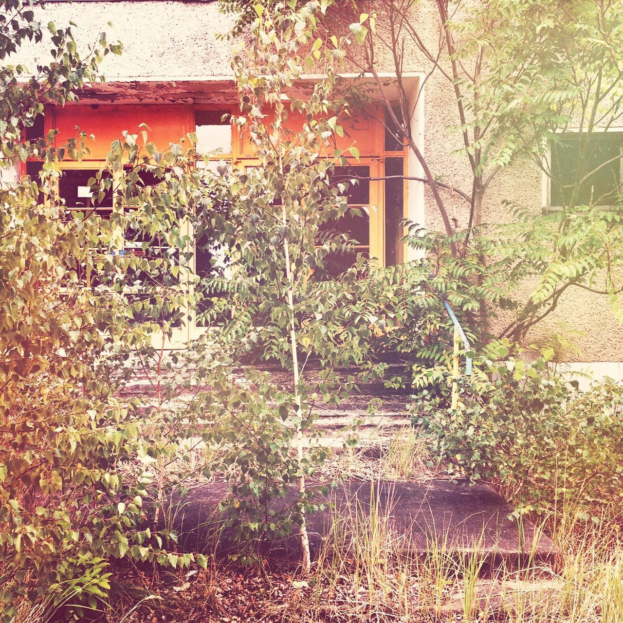 building exterior, architecture, built structure, plant, house, outdoors, no people, growth, day, nature, tree, beauty in nature