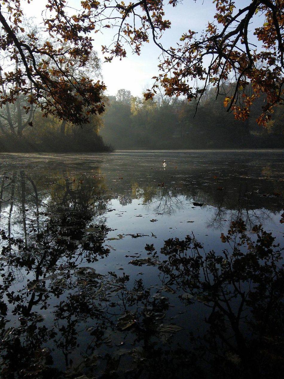 Autumn Nature Water Reflections Autumn🍁🍁🍁